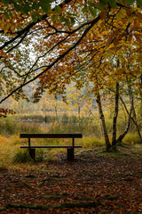 Empty Bench By Lake In Park During Autumn