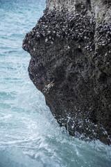 Krabbe auf dem Felsen in Golf von Oman