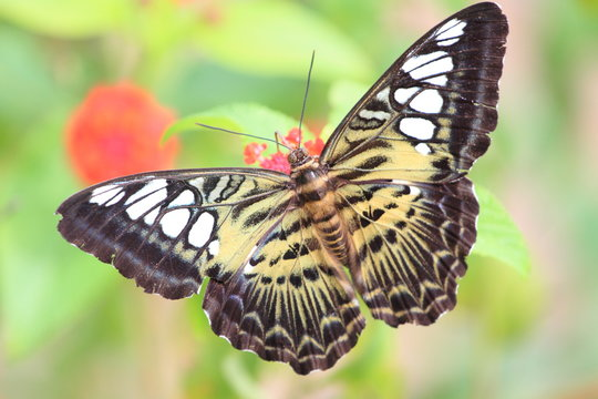 Close-Up Of Butterfly Against Blurred Background