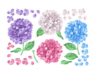 Set collection of Lilac hydrangea flowers, leaves, petals isolated on white background. Watercolor style. Editable elements.
