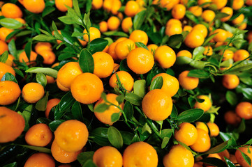 Kumquat, the decoration of Chinese lunar new year