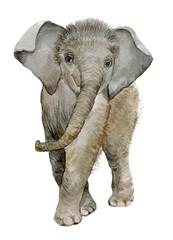 elephant illustration watercolor