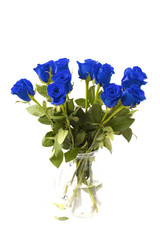 Beautiful Blue Roses on a White Background