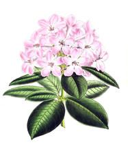 Illustration of a flower