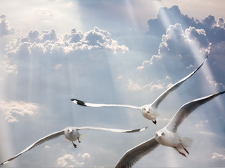 Seagulls flying over cloudy blue sky with light ray