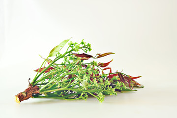 Neem will bloom in the season, which in one year will be the only Thai people to boil and eat with chili.