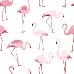 Canvas Prints Pink red exotic flamingo birds species seamless pattern. Detailed feather drawing. Standing moving leaning postures. Isolated on clean white background. Africa America continents fauna.