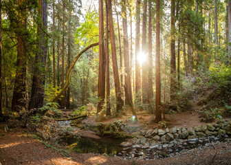 Small creek winds through tall redwood trees in Muir Woods