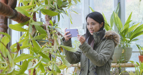 Woman taking photo on the plant in green house