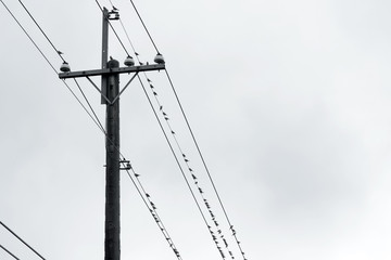 birds sitting on wires and electric pole.