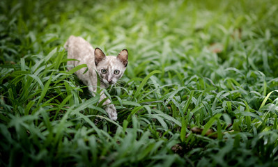 Cat on green grass in garden