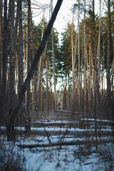 Photo of winter landscape, snow in woods