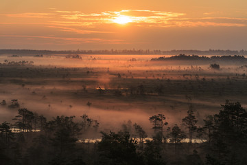 Dawn over fields with trees in Narke, Sweden