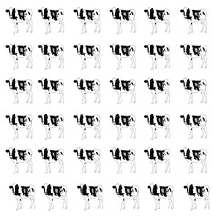 Cow, cows, patches, farm animal, home animals, wallpaper.