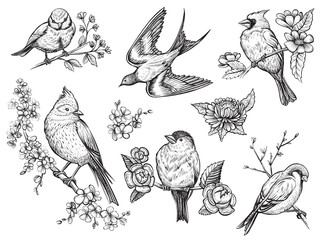 Birds hand drawn illuatrations in vintage style with spring blossom flowers. Fotobehang