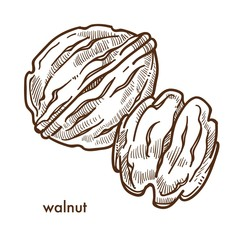 Healthy delicious walnut in hard shell and peeled