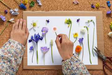 Child makes a herbarium of different spring flowers. Children education concept. Selective focus.
