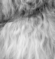 black and white wool background