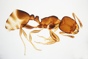 Exoskeleton of an ant, microscope image