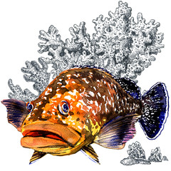 Fresh giant grouper sea fish with corals, isolated. Watercolor illustration on white background. Marine wallpaper