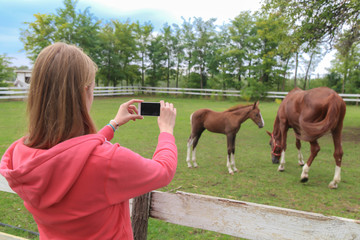 Woman holding smartphone with blank screen and taking picture of horses.