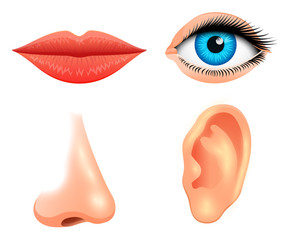 Human biology, sensory organs, anatomy illustration. face detailed kiss or lips, nose and ear, eye or view. set medical science or healthy man. vision, hearing, taste, smell, touch, look, europeoid.