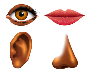 Human biology, sensory organs, anatomy illustration. face detailed kiss or lips, nose and ear, eye or view. set medical, healthy man. vision, hearing, taste, smell, touch, look, African American women