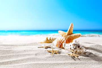 beautiful sea shells on the seashore with room for a product or advertising text