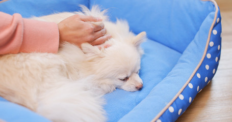 Pet owner massaging on her dog