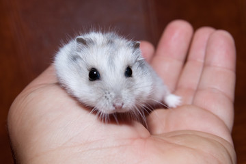 Hamster in a hand