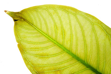 Leaves texture.background