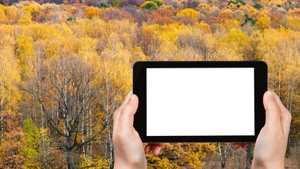 tourist photographs yellow forest in autumn