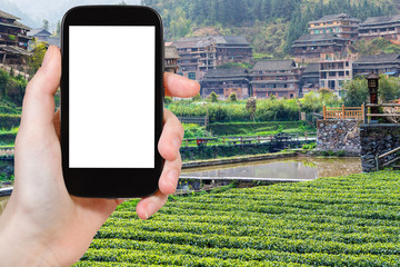 tourist photograph tea plantation in Chengyang