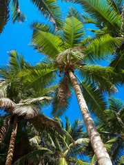 Palms against the blue sky