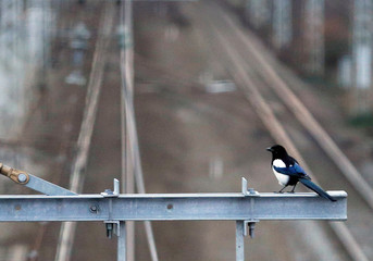 A magpie is perched above rail tracks of the French state-owned railway company SNCF at the station of Castelnau d'Estretefonds