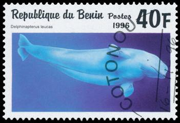 Stamp printed in Benin showing Beluga Whale
