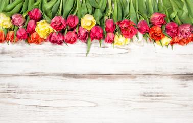 Fresh multicolor tulips Spring flowers