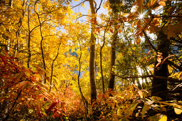 Autumn forest at sunrise, June Lake, California, America, USA