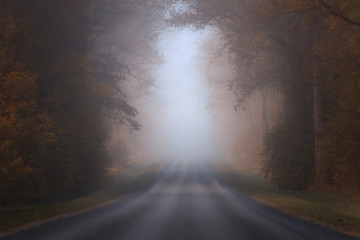 Treelined road in the fog, Lithuania