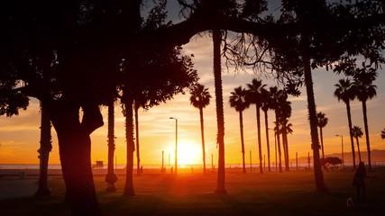 Fotobehang - Palm trees at sunset on ocean beach Santa Monica California Timelapse hyperlapse