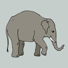 national animal thailand isolated elephant