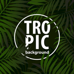 Trendy tropic pattern covers set. Design floral backgrounds for invitation, brochure. Vector illustration