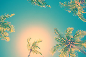 Palm trees on clear sunny sky filtered with retro vintage style photo effect