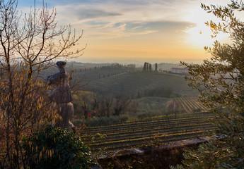 A vineyard called Friuli. Rosazzo at sunset.