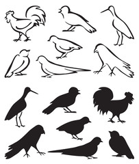 silhouette birds sitting