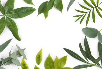 Green leaves frame of different exotic plants isolated on white