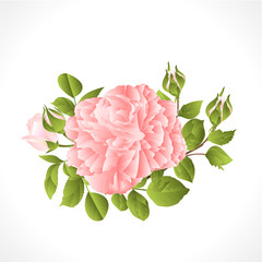 Light pink   rose with buds and leaves vintage  on a white background  vector illustration editable hand draw