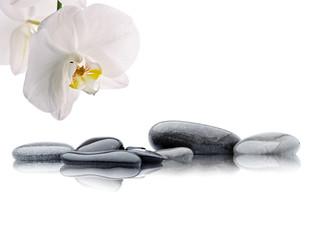 spa de orquídea blanca con piedras