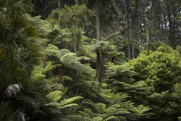 Kawau Island New Zealand