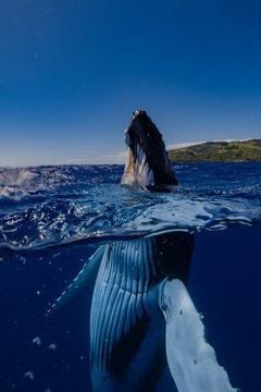 baleine mi eau mi air